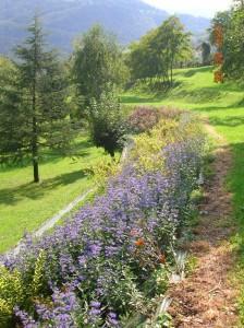 10 - Scarpate fiorite dopo un anno